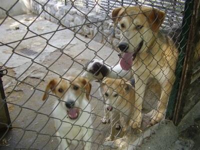 Refugi d'animals