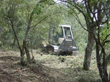 Tasques de manteniment del bosc